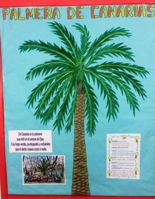 palmeradecanarias.jpg